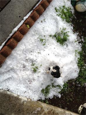 雹の残骸?