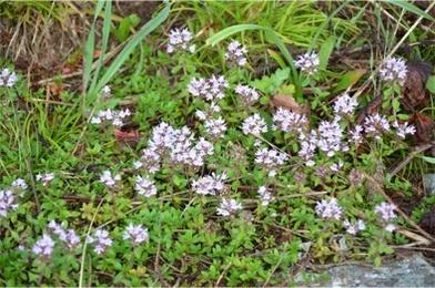 高原の花たち9