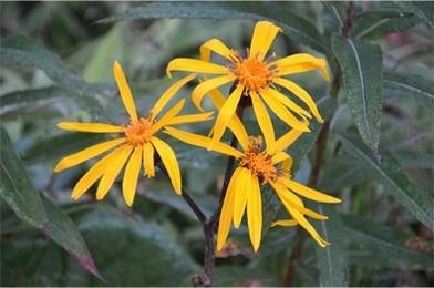 高原の花たち5