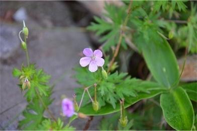 高原の花たち1