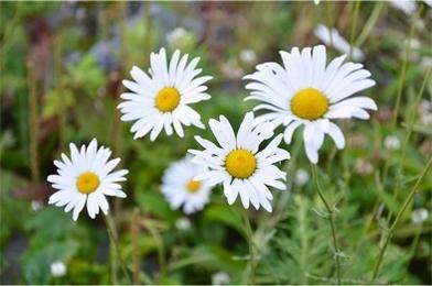 高原の花たち8