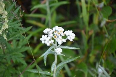 高原の花たち2